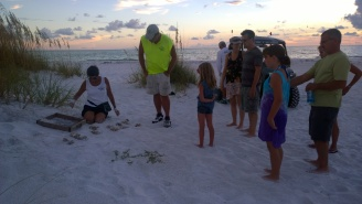 A crowd forms around AMITW volunteers Sept. 4 as they excavate a nest near the Sea Grape Lane beach access in Anna Maria.