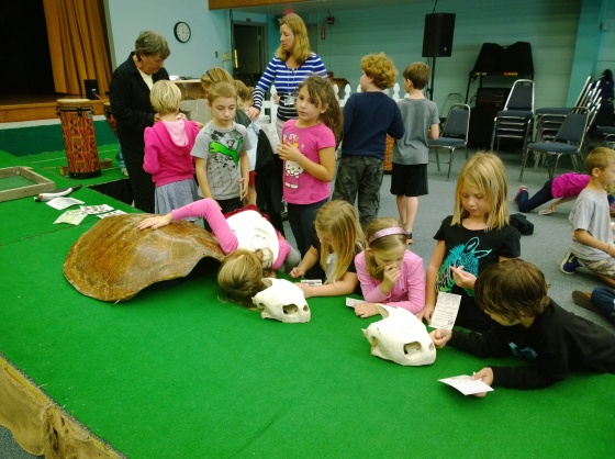 Anna Maria Elementary School second-graders look at sea turtle skeletons.